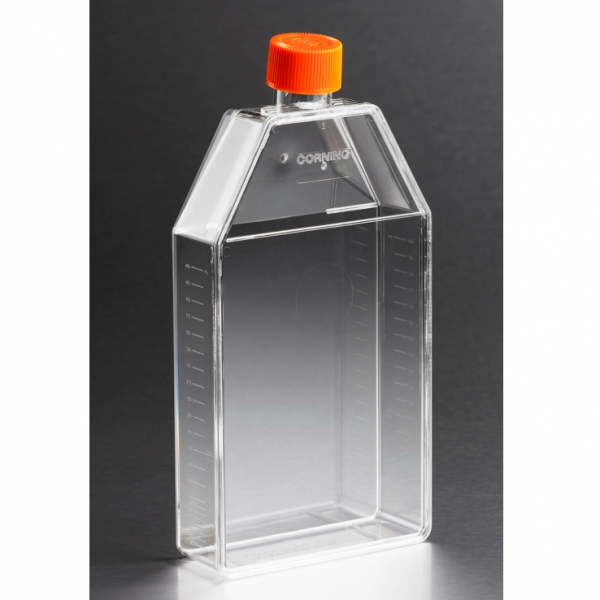 150cm² TC Flask, canted neck, vented cap, Corning