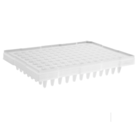 96 Well Clear PCR Half Skirt Amplification Plate with a Single Notch, Axygen