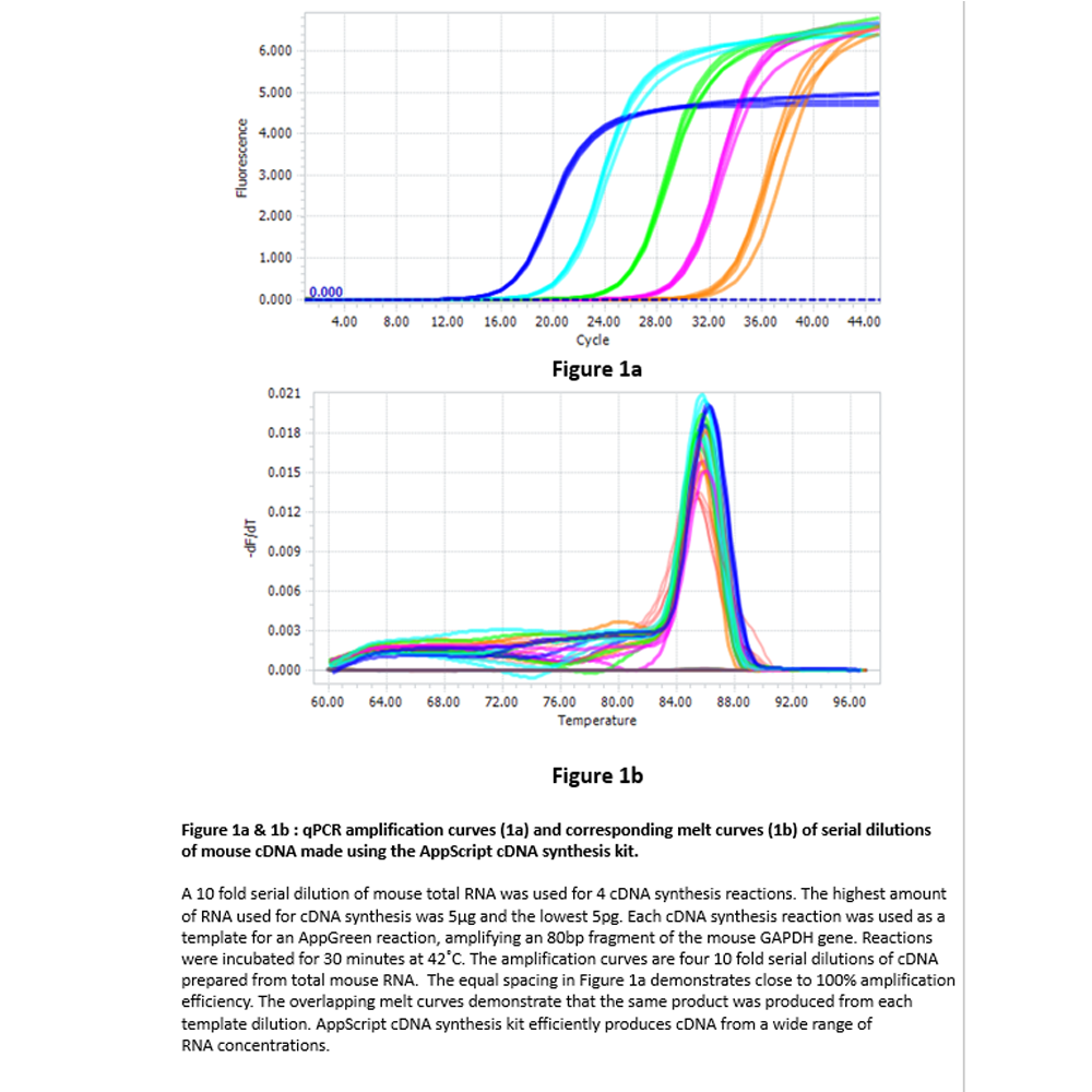 AppScript cDNA synthesis kit, 100 reactions