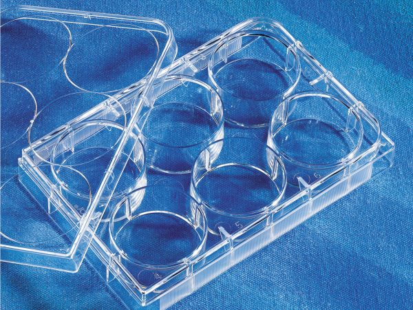 6-well Clear TC-treated Multiple Well Plates, Individually Wrapped, Sterile, Corning